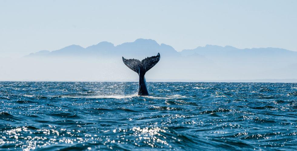 고래 위반 및